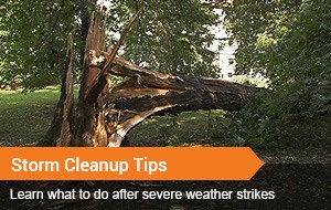 Storm Cleanup Tips
